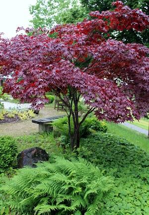 Japanischer Garten der Erinnerung 02