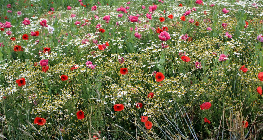 GW-Blumenwiese-Vorschaubild