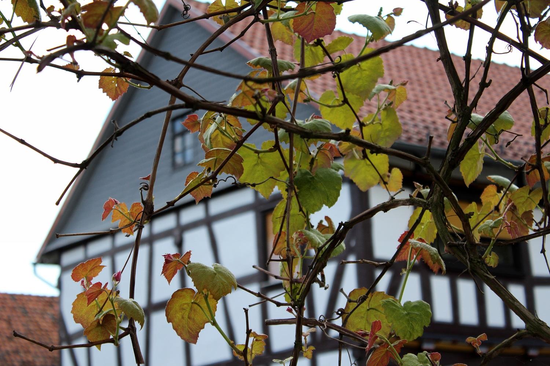 Klettergerüst Pflanzen Holz : Strategien zum klettern garten wissen