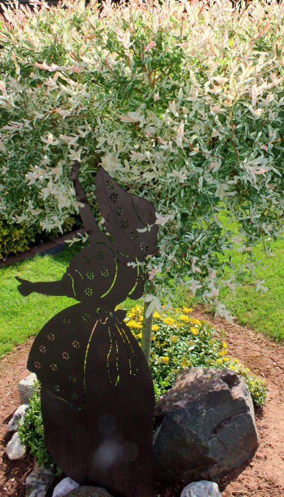 Harlekinweide Salix Integra Hakuro Nishiki Garten Wissen