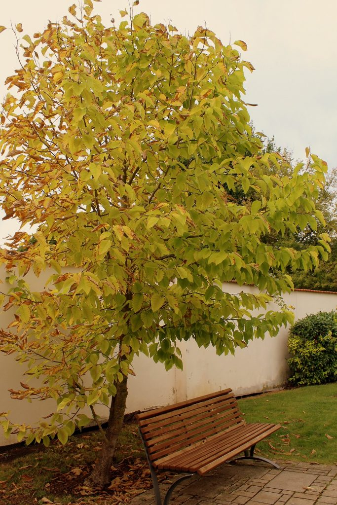 magnoliengarten_05b