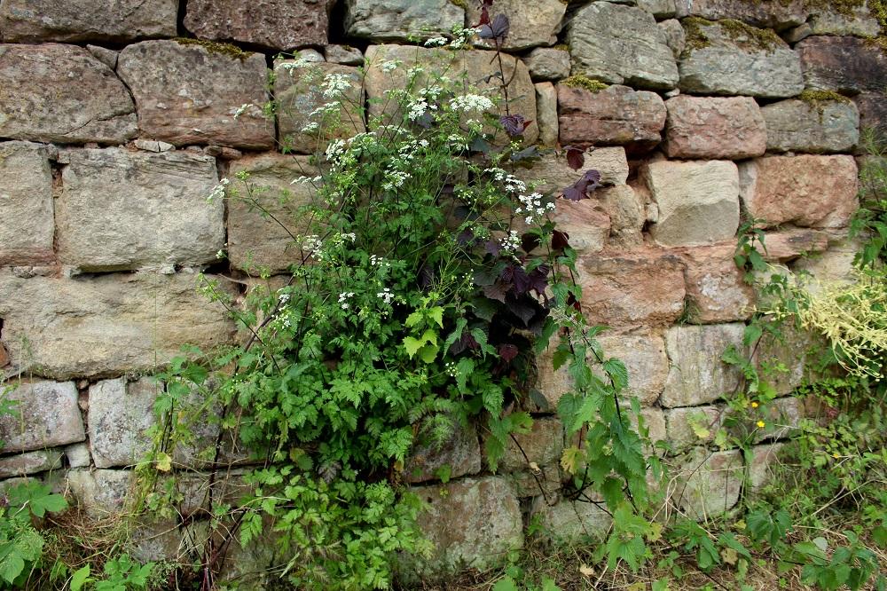 Gartenmauern garten wissen - Hangsicherung garten ...