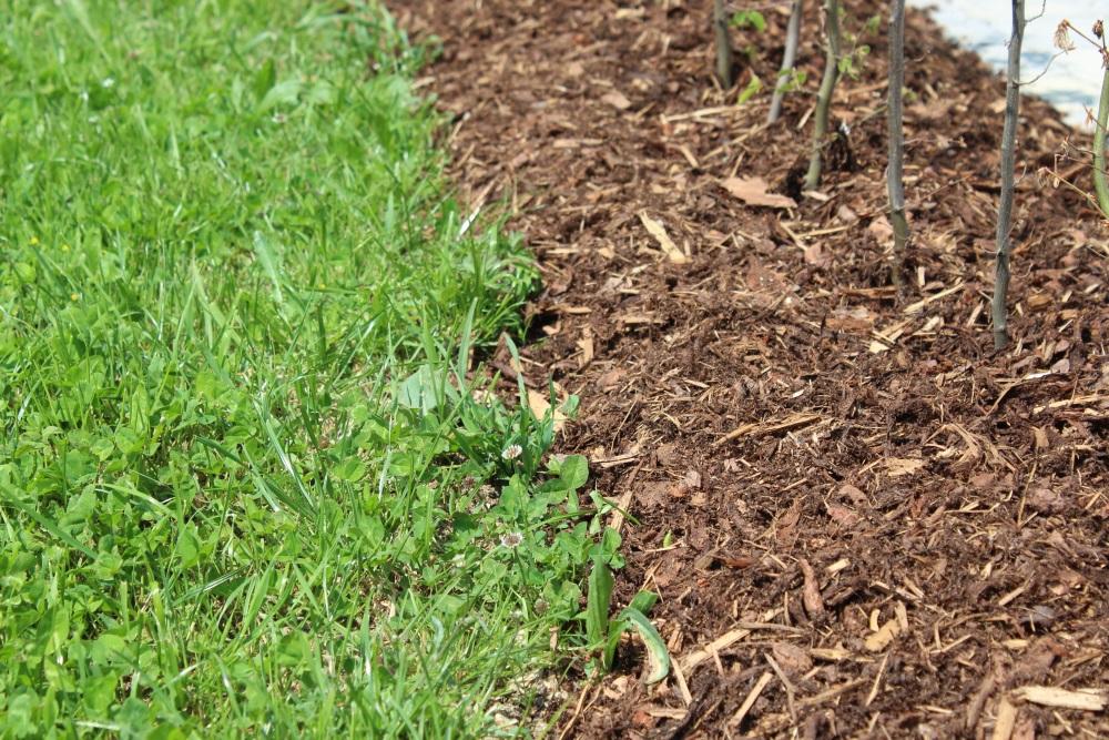 Favorit Rasenkanten richtig anlegen   Garten Wissen BC45