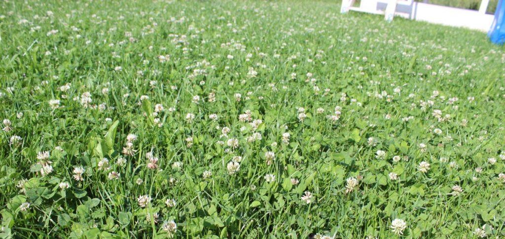 Blühende Wiese anstatt Rasen
